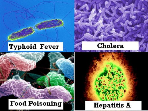What is a Disease Vector with pictures  wisegeekcom