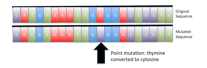 Image: Illustration of a point mutation