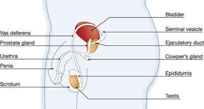 Vaginal Development During Puberty