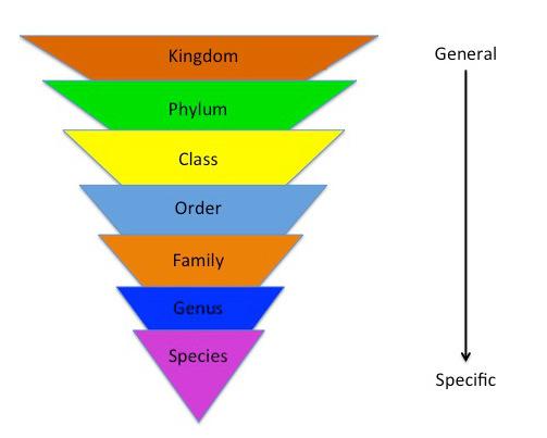Image result for linnaean system