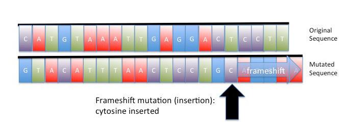 mutation essay Gene insertion can be used to correct an inherited genetic defect which is causing disease, to counter or correct the effects of a genetic mutation, or even to program a cell for an entirely new function or property.