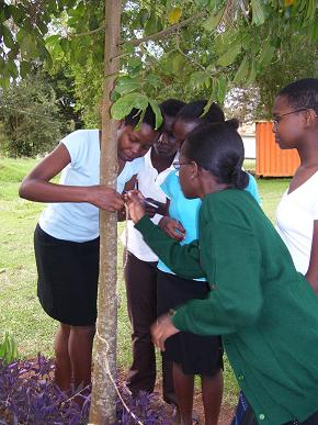 Students carrying out research on the compound