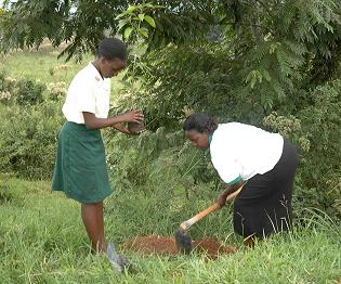 The teacher shows a student how to plant a tree seedling