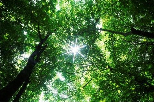 Canopy and sunshine (Nature - Microsoft Clip Organizer).jpg