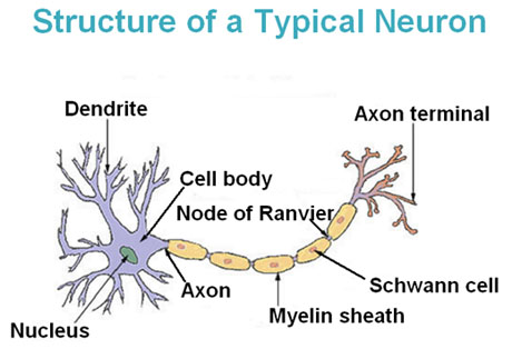 Neuron creations wikieducator neurong ccuart