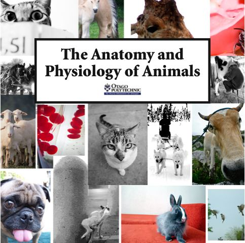 pictures of animals. of Animals Cover