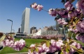 Cherry Blossoms at UN Headquarters.jpg