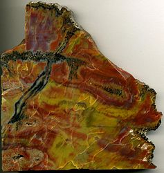 Image: Permineralized wood