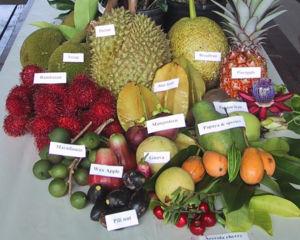 vitamin definition classification
