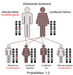 Illustration of Autosomal dominant inheritance