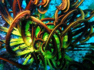 459994-A-colourful-feather-star-01.jpg