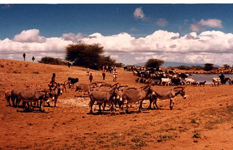 Image: Pastoralists, Lake Turkana, 1979.