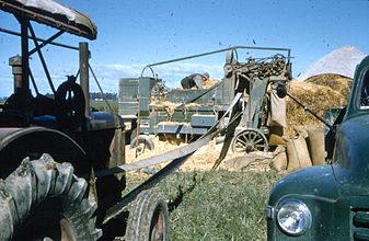 Chaffcutting at Tillyfour.1956.JPG