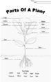 PlantDiagramAnswers.png