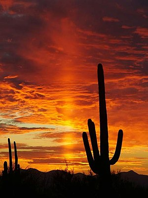 Sunset in Saguaro National Park