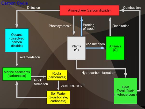 diagram for ocean biogeochemical cycles wikieducator  biogeochemical cycles wikieducator