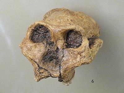 Biological Anthropolog...