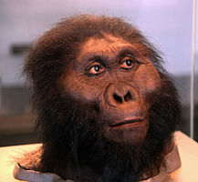 Image: Paranthropus boisei; model of adult male (Smithsonian Museum of Natural History)