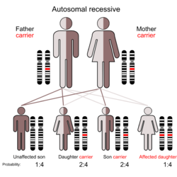 Illustration of Autosomal recessive inheritance